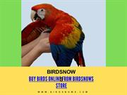 Buy Birds Online From Birdsnows Store