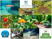 Cayman Turtle Centre PPT October 2019