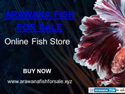 Hurry And Buy Arowana Fish Online At Best Price