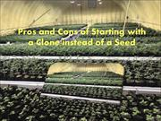 Pros and Cons of Starting with a Clone