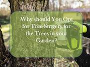 Why should You Opt for Tree Surgery for the Trees in your Garden?