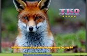 Wildlife Removal Specialist Montgomery County PA
