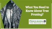 What You Need to Know About Tree Pruning? - Precision Tree Services