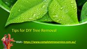 Tips for DIY Tree Removal