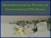 Mold Removal In Toronto & Surrounding GTA Areas