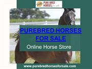 Pure Breed Horses For Sale | Hurry, Offer Limited