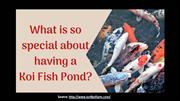 What so special about having a koi fish pond?