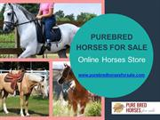 Pure Breed Horses For Sale | Buy Horses At Attractive Prices