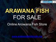 Buy Healthy Arowana Fish Food For Your Fishes