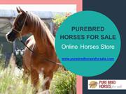 Buy Best Breed Horse Online Of Your Choice At Our Online Store