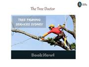 Tree Pruning Services in Sydney | The Tree Doctor