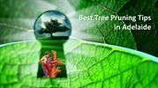 Best Tree Pruning Tips in Adelaide