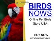 Buy Bird Cages Online For Your Pet Birds