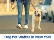 Dog boarding in NYC