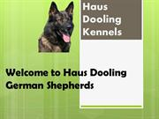 Haus Dooling German Shepherds