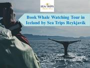 Book Whale Watching Tour in Iceland by Sea Trips Reykjavík