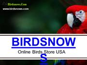 Buy Birds Online At Amazing Prices