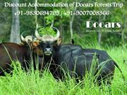 Discount Accommodation of Dooars Forests Trip