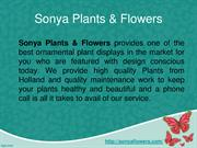 CULTIVATION OF PLANT NURSERY