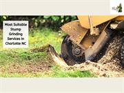 Most Suitable Stump Grinding Services In Charlotte NC
