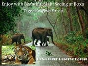Enjoy with Beautiful Sight Seeing at Boxa Tiger Reserve Forest