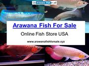 Buy Arowana Fish Online At Reasonable Price