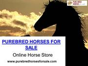 Best Pure Breed Horses For Sale At Amazing Prices