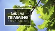 Oak Tree Trimming Cost Guide