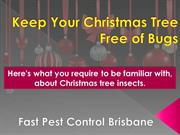 Keep Your Christmas Tree Free of Bugs