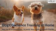 Dog Obedience Training at Home - Sam Ivy