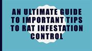 An ultimate guide to important tips to rat infestation control