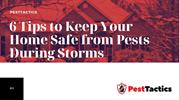 6 Tips to Keep Your Home Safe from Pests During Storms