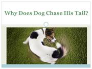 Why Does Dog Chase His Tail?