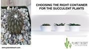 CHOOSING THE RIGHT CONTAINER FOR THE SUCCULENT PLANTS