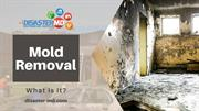 How Mold Remediation Specialists Help You?