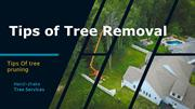 Tips of Tree Removal