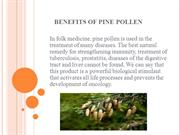 Why pine pollen is useful and how to apply it?