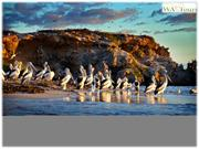 Enjoy The Adventures of Swan Valley With WA Tours