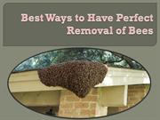 Best Ways to Have Perfect Removal of Bees