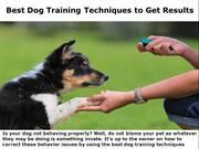 Dog Training Techniques to Get Results