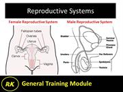16.1 Reproductive System - Female