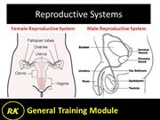 16.2 Reproductive System - Male