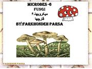 Microbes-6
