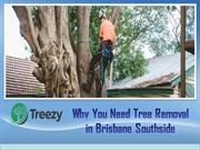 Why You Need Tree Removal in Brisbane Southside