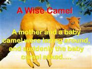 Wise Camel