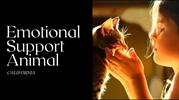 Emotional Support Animal