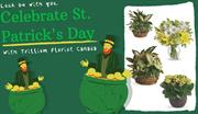 Celebrate St. Patrick's Day With Trillium Florist Canada