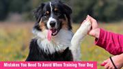 Dog Training Tips: Mistakes You Need To Avoid When Training Your Dog