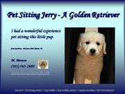Pet Sitting Jerry - A Golden Retriever