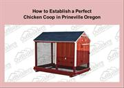 How to Establish a Perfect Chicken Coop in Prineville Oregon